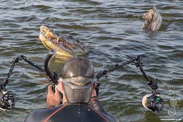 Photographing crocodiles at Banco Chinchorro