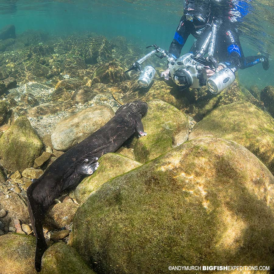 Giant Salamander Snorkeling Adventure